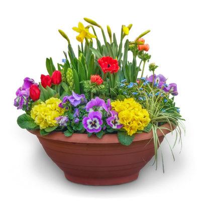 Pflanzschale Frühling Nr. 25 von Blumen Weimar in Neu-Ulm